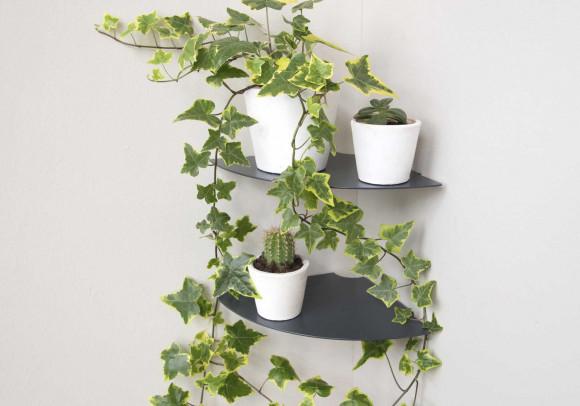 Pflanzenregal 36 cm - Satz von 2